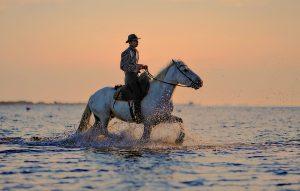 phone, horses, hold, iPhone, 7, Plus