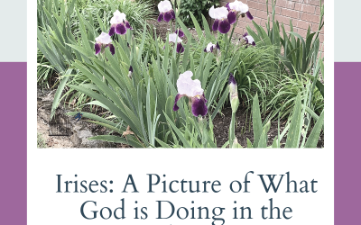 Irises: A Prophetic Picture of What God is Doing in the Cluster